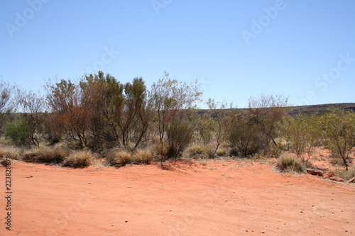 outback landscape in queensland australia