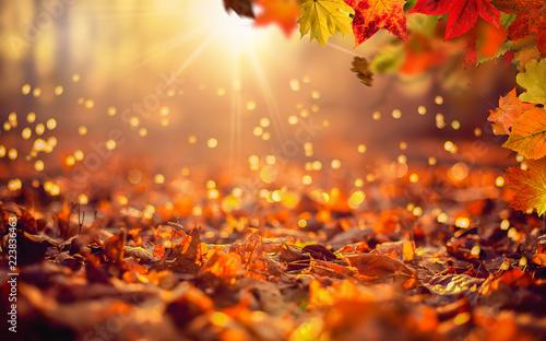 Photo Hintergrund mit herbstlicher Szene im Wald mit fallenden Blättern und untergehen