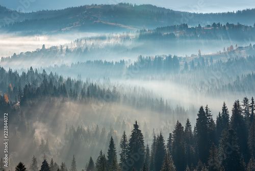 Poster Morning with fog First rays of sun in Carpathians.