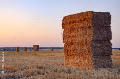 Fotografie, Obraz  Rectangular haystacks on the empty field after harvesting illuminated by the warm light of setting sun