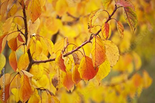 Papiers peints Orange Feuilles d'automne