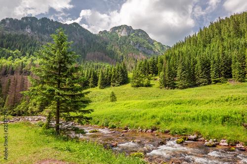 Fototapeta Stunning small stream in Koscieliska valley, Tatra mountains obraz