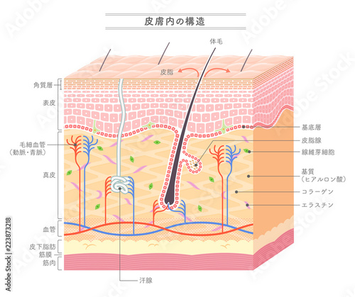 Fotomural  Structure in the skin_Japanese notation