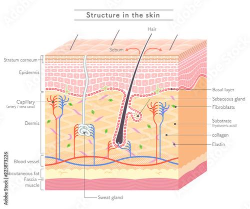 Obraz Structure in the skin_English notation - fototapety do salonu