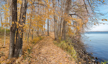 A Path Covered With Fallen Yellow Leaves Winds Between The Trees Along The Lake Shore On A Fall Day At Father Hennepin State Park In Northern Minnesota