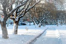 Street Tree Wood Pedestrian Winter