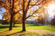 Central park in New York City at sunny autumn day, USA