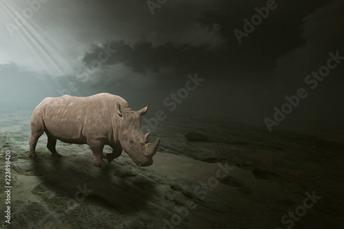 Fotografija  A white rhino grazing in an open field