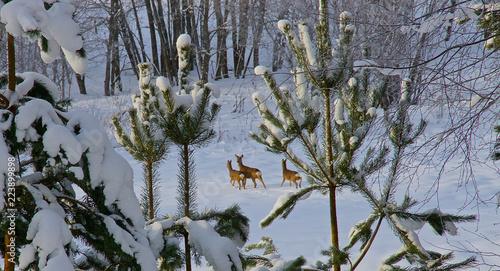 Foto op Plexiglas Ree Eine Herde Rehe läuft durch den hohen Schnee
