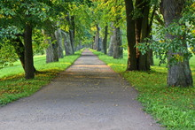 Long Dirt Road In A Shady Beautiful City Park Among The Smooth Rows Of Oak Trees At Summer Sunny Morning