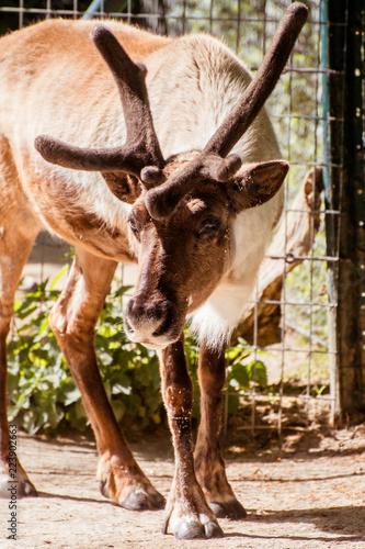 Spoed Fotobehang Hipster Dieren deer in zoo