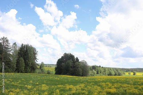 Poster Wit Landscape is summer. Green trees and grass in a countryside land