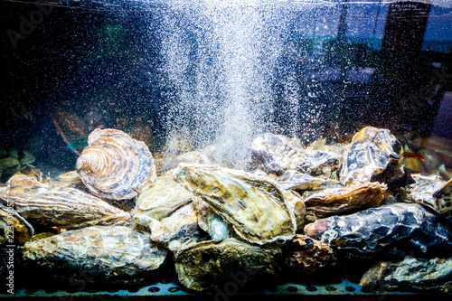 Shells, oysters for sale, sea clams inside aquarium in a restaurant