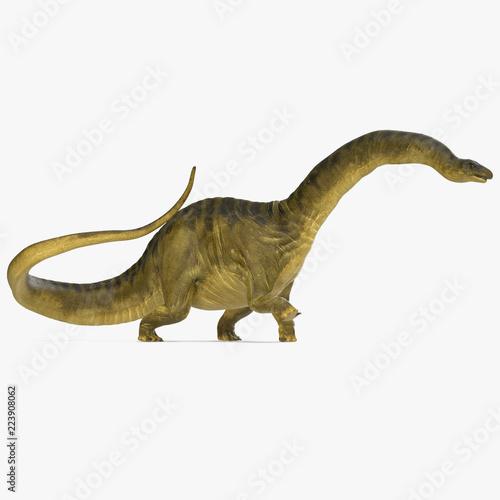 Photo  Apatosaurus Dinosaur model on white. 3D illustration