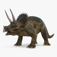 Triceratops dinosaur on bright background. 3D illustration