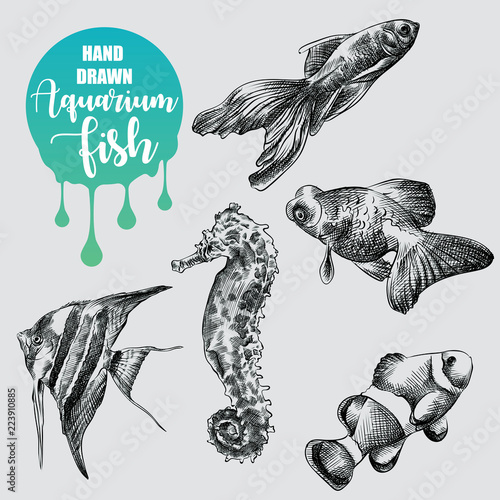 Set Of Hand Drawn Aquarium Fish Sketch Isolated On White Background