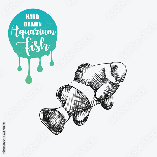 Fotografia, Obraz Hand drawn clownfish sketch isolated on white background and blob with drops