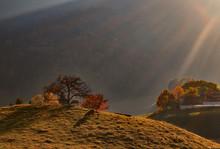 Sheep Gazing On Hillside In Gr...