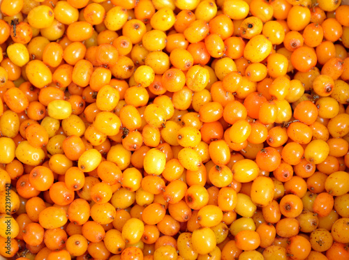 Background from ripe berries of a sea-buckthorn