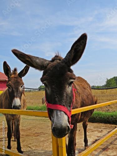 Deurstickers Ezel Donkeys