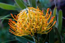 Close Up Of Stunning Australia...