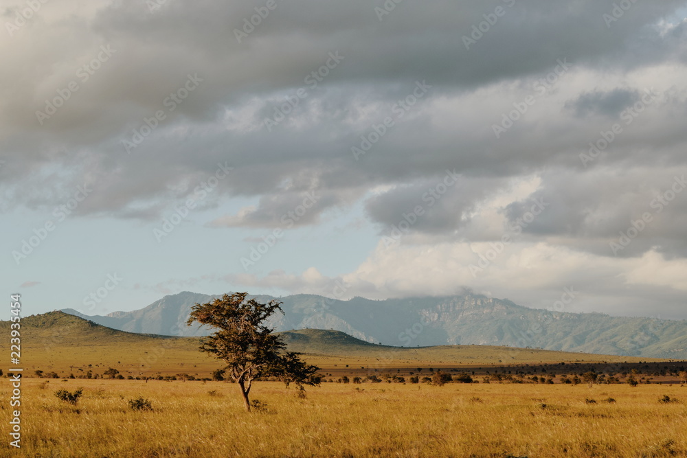 Fototapeta The savannah landscapes of Taita Hills Wildlife Sanctuary, Voi, Kenya