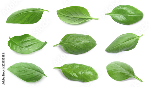 Set with green fresh basil leaves on white background