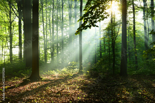 Wall Murals Forest Beautiful sunrise in forest