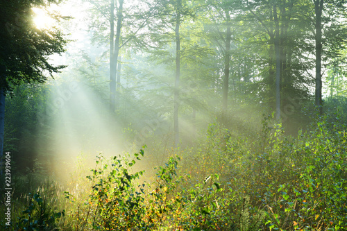 Poster Printemps Beautiful sunrise in forest
