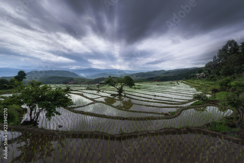 Keuken foto achterwand Lavendel Golden rice fields in the countryside of Thailand The beautiful sunset at Terraced Paddy Field in Mae-Jam Village , Chaingmai Province of Thailand