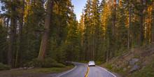 Road Amidst Towering Trees In Yosemite, California