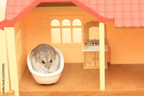 Fotografie, Obraz  ハムスターのお風呂