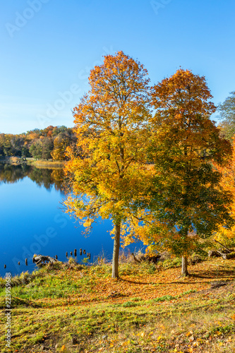 Fotografia, Obraz  View of a lake in the autumn