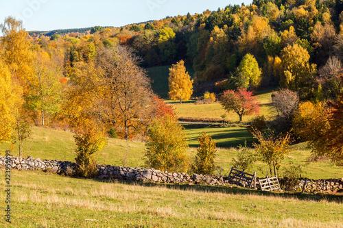Fotografiet  Rural meadow in autumn landscape