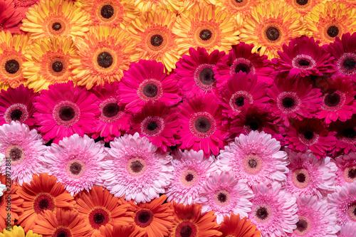 Fotobehang Gerbera Gerbera flower spattern.