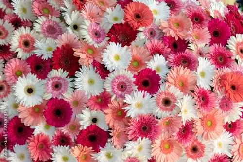 Gerbera flower spattern.
