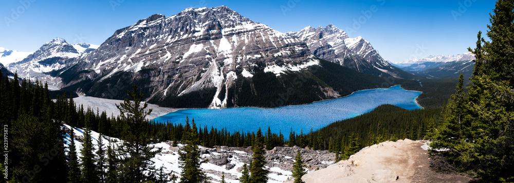 Fototapeta Panoramic view of Peyto lake on icefield parkway