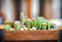 Many Small Cactus In Different Shape .