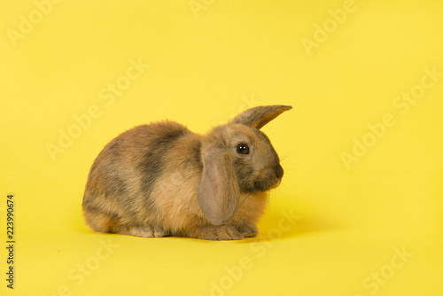 Cute rabbit seen from the side on a yellow background