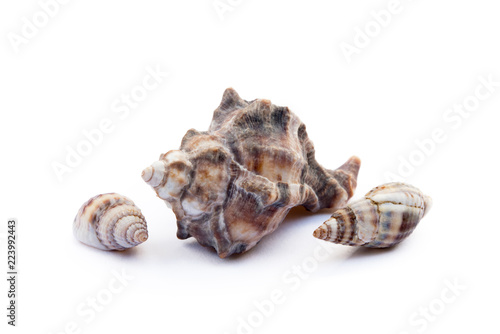Poster Oceanië Exotic sea shells isolated on white background