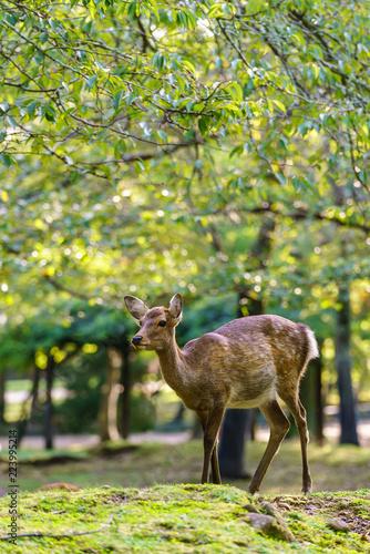 Deurstickers Hert 鹿