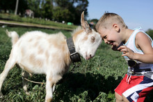 Child And Goat Head Butting