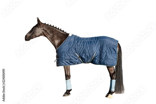 Horse in a blanket isolated