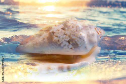 Obraz na plátně  seashell nautilus on sea beach under sunset sun light, double exposure effect