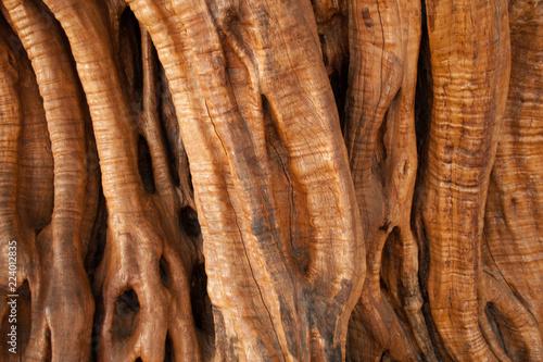 Foto op Plexiglas Olijfboom olive bark, abstract background