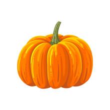 Pumpkin. Cartoon Illustration.