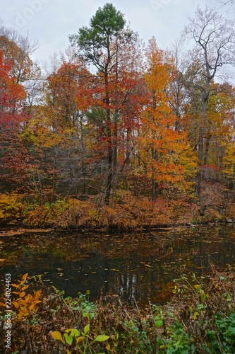 Foto op Canvas Herfst The Bronx, New York, USA: Autumn forest scene with a stream at the 250-acre New York Botanical Garden, established in 1891.