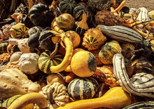 A Crate Of Gourds At An Orchard