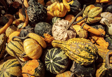 Looking Down At A Crate Of Gourds