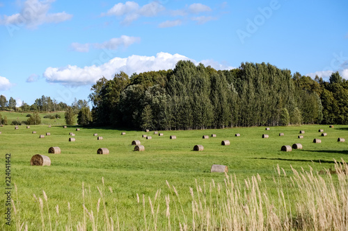 Tuinposter Pistache rolls of hay laying in distant field
